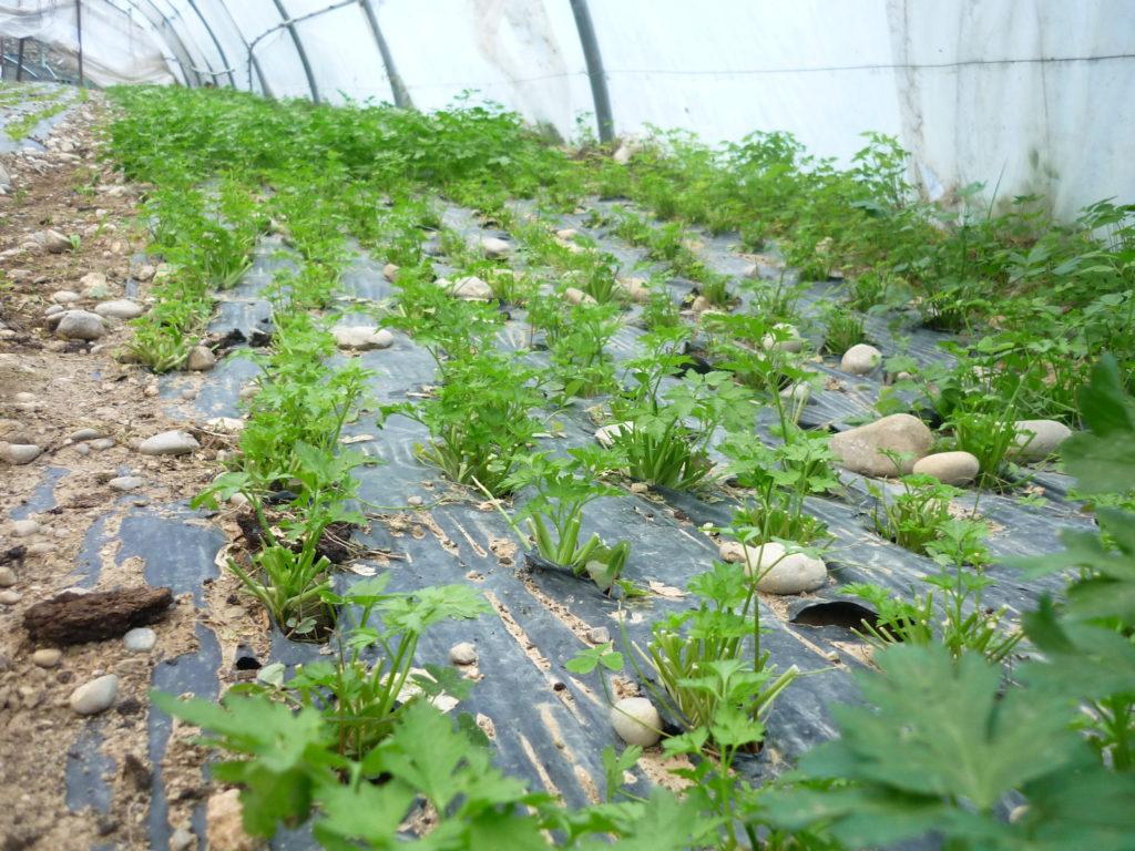 季節によって様々な野菜や果物が育ちます。